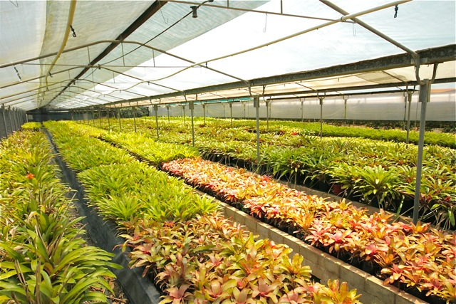 Bromeliad Garden Nursery