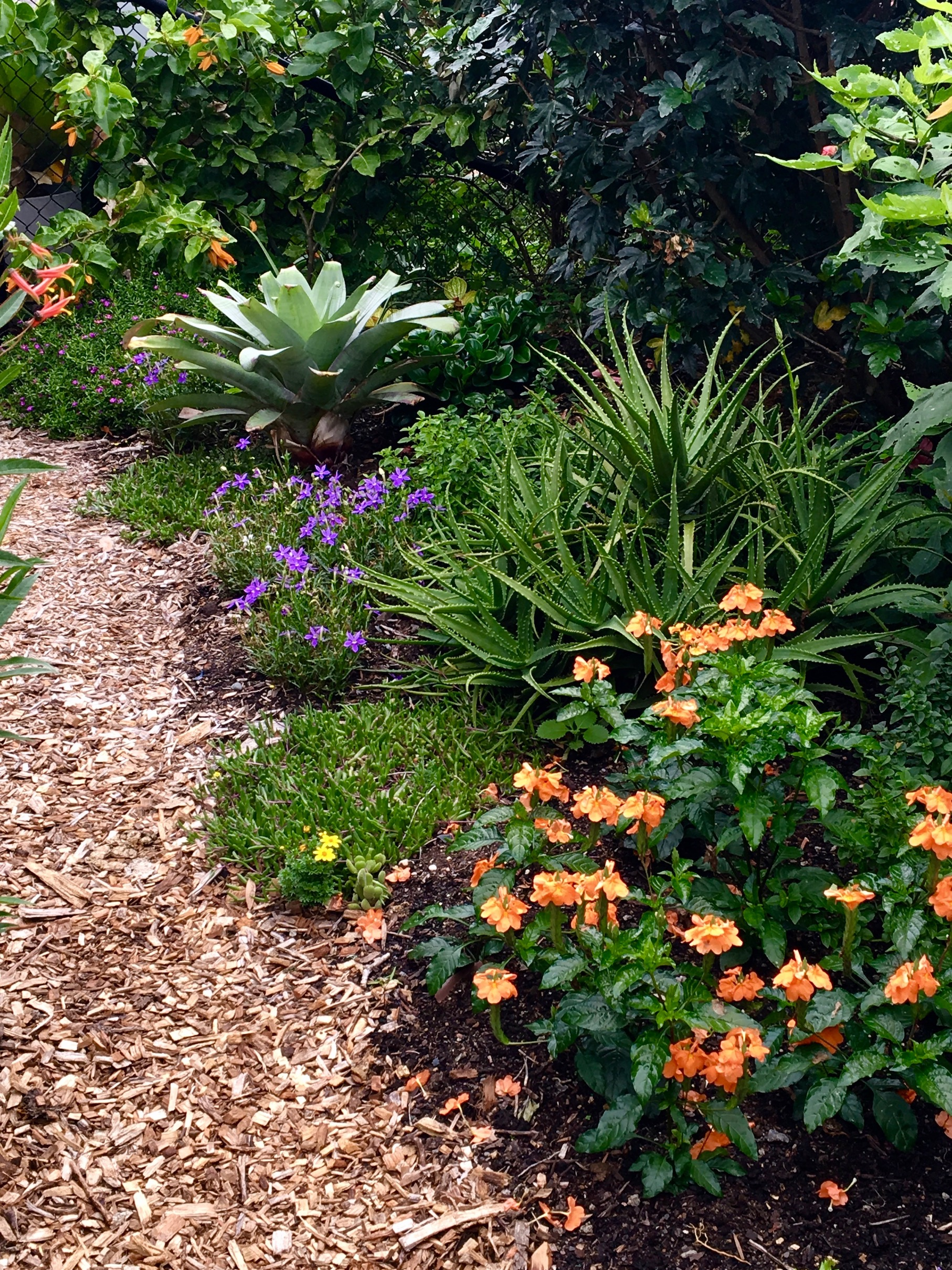 Crossandra and Laurentia add welcome at 'Sea-Changer's Front Gate Garden